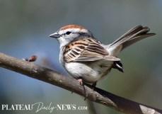 audubon (50)