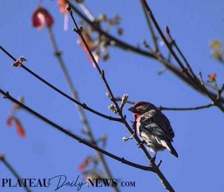 audubon (61)