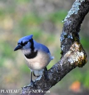 audubon (62)