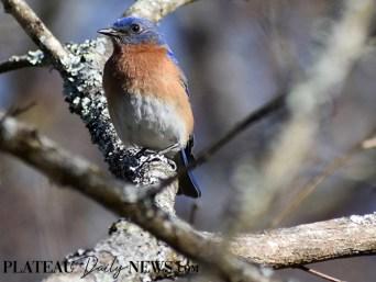audubon (68)