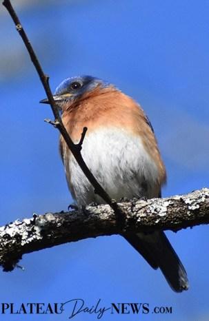 audubon (73)