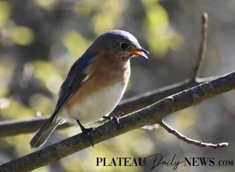 audubon (74)