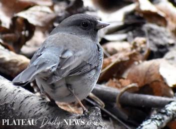 audubon (89)