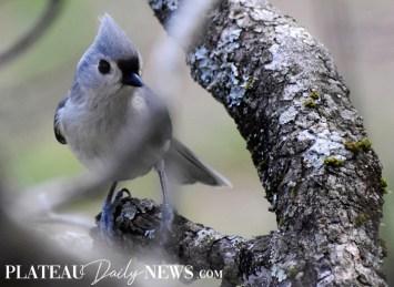 audubon (93)