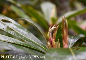 Botanical.Garden (30)
