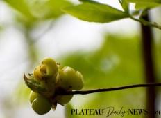 Botanical.Garden (9)