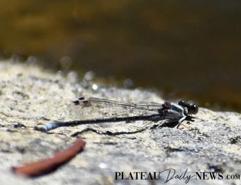 Dragonflies (13)