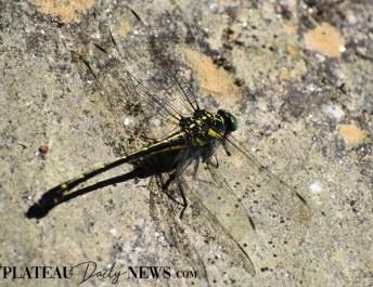 Dragonflies (14)