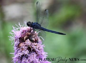 Dragonflies (23)