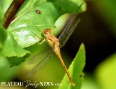 Dragonflies (30)