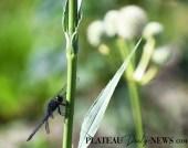 Dragonflies (46)