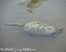 Turtles (11)