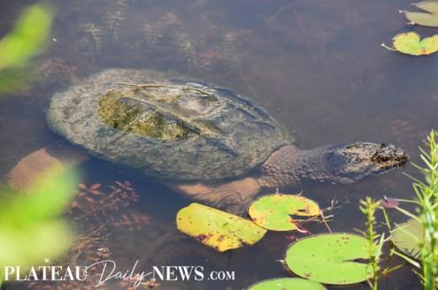 Turtles (23)