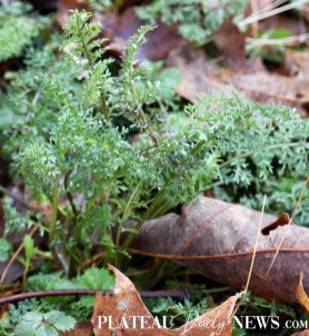 Plant.Rock (2)