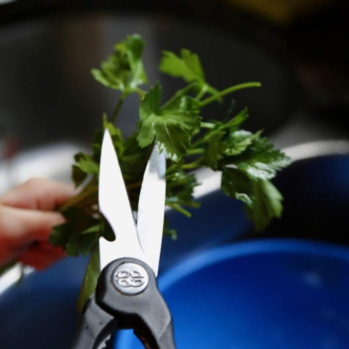 clipping off parsley stems with kitchen shears