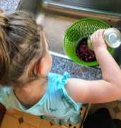 Child pours beans into colander