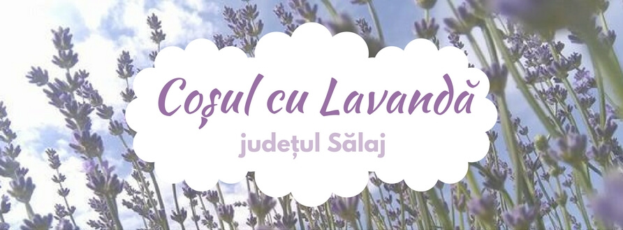 Coșul cu Lavandă, sărbătoarea florală a familiei Dârjan [Video]