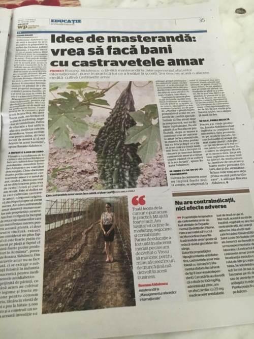 Cultura de castravete amar din judetul Ialomita, crescut de Roxana Aldulescu in presa(3)