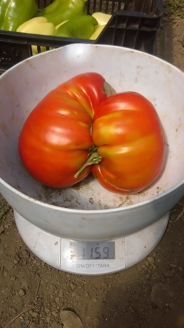 Gusturi de altadata, legume naturale romanesti (2)