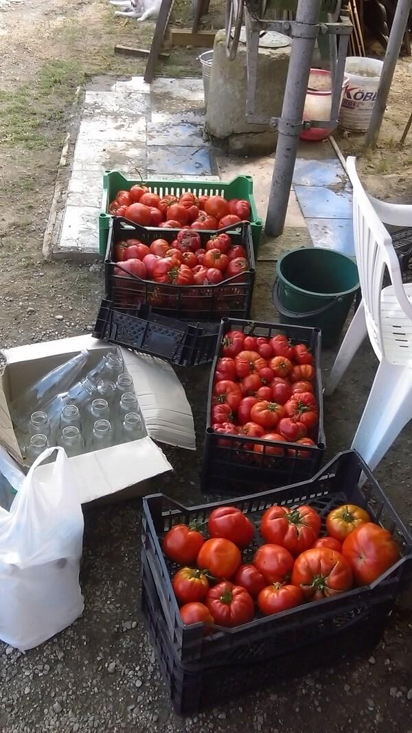 Gusturi de altadata, legume naturale romanesti (3)