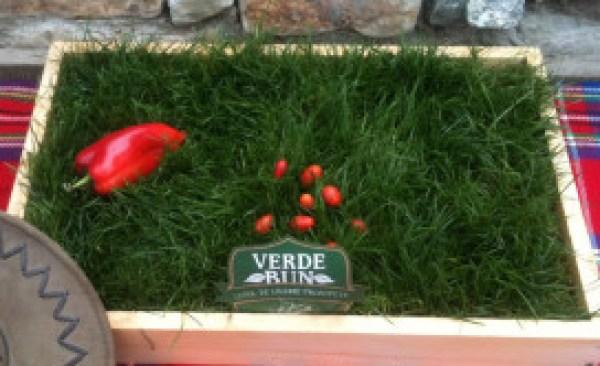 Lădiţă cu iarbă pentru serviciu de la Verde Bun