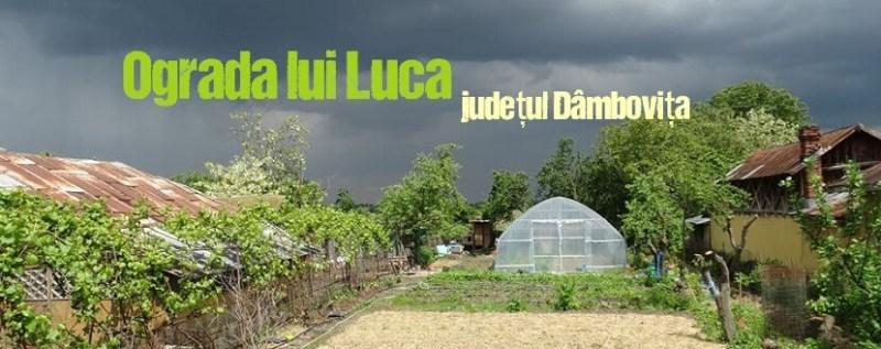 legume-si-fructe-romanesti-din-ograda-lui-luca-judetul-dambovita