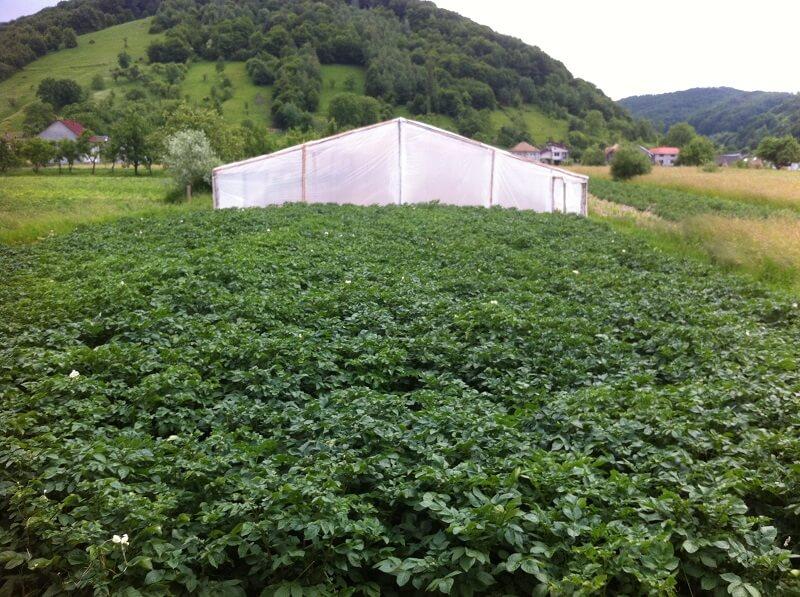lusca-produse-cu-gust-romanesc-cos-legume-nasaud-livrare-la-domiciliu-7