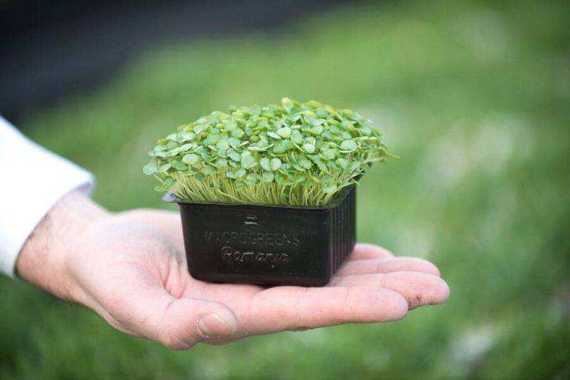 Microplante-Microgreens-Romania