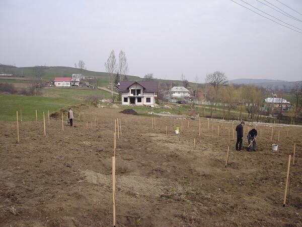 poeferma-ferma-din-localitatea-bucecea-judetul-botosani-16