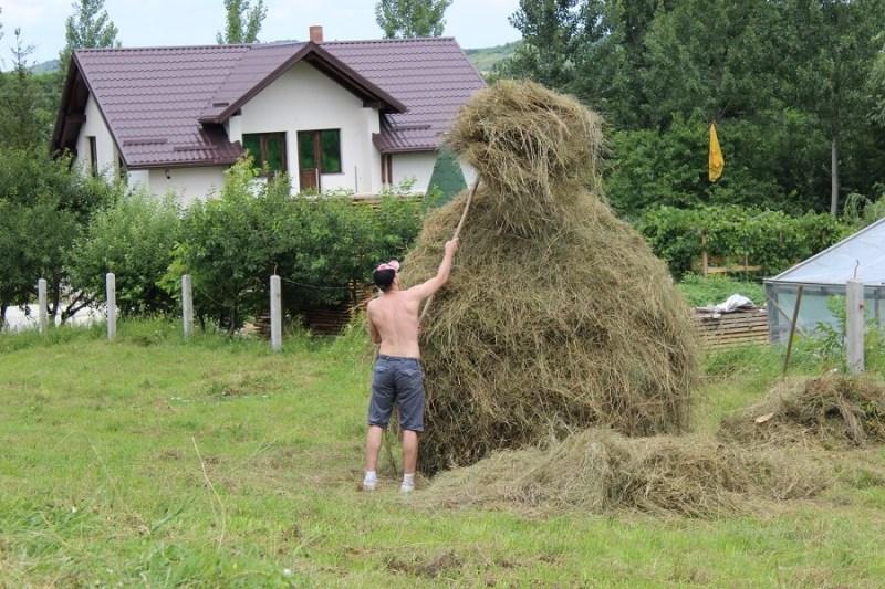 poeferma-ferma-din-localitatea-bucecea-judetul-botosani-26