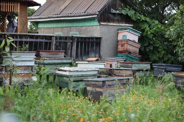 poeferma-ferma-din-localitatea-bucecea-judetul-botosani-57