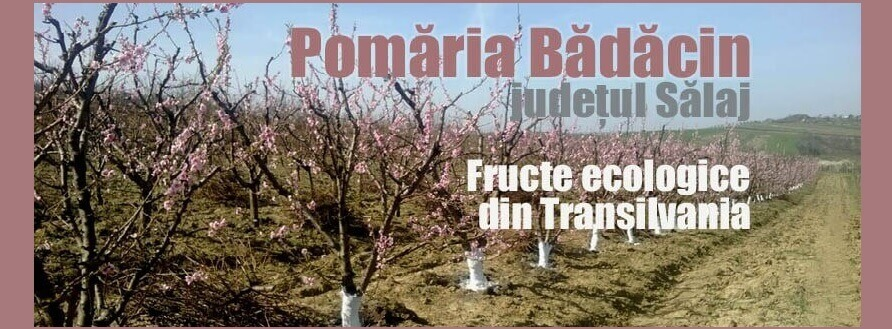 Pomăria Bădăcin, fructe ecologice din Transilvania