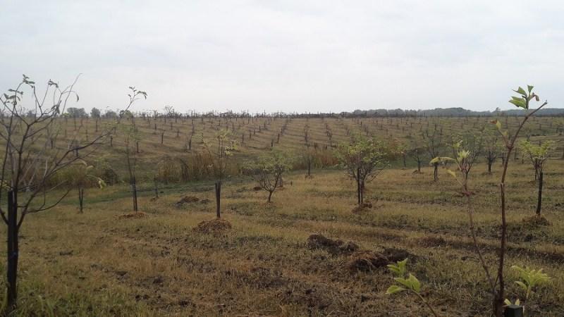 Sana plant extract, plantatie lavanda, mur, soc si aronia, sucuri naturale (17)