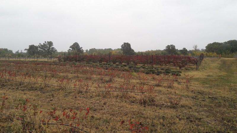 Sana plant extract, plantatie lavanda, mur, soc si aronia, sucuri naturale (18)