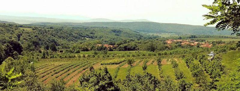 Vedere Ferma Bărzani din județul Arad