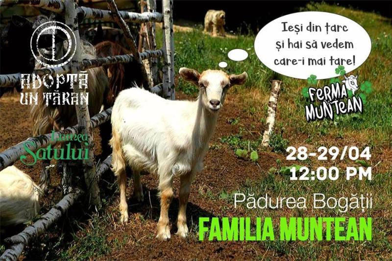 Vizita la stana de capre Ferma Muntean, judetul Brasov
