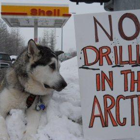 Court rules against Alaska Arctic drilling