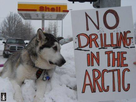 Omally resisting Shell Drilling