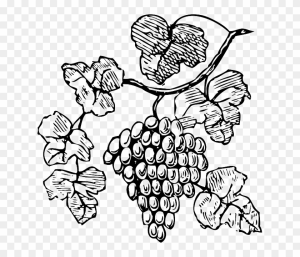 93-932217_food-wine-grapes-outline-drawing-tree-border-grapes-clipart