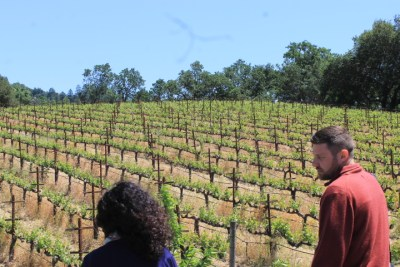 Walking through the vineyard at Ehlers Estate, in beautiful St. Helena