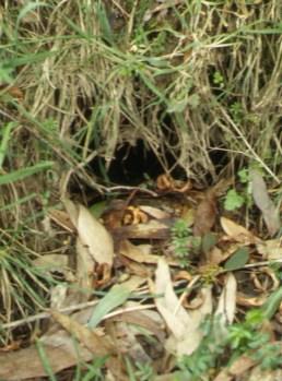 burrow - Toor 175.4