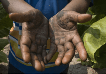 The hands of the man in the field