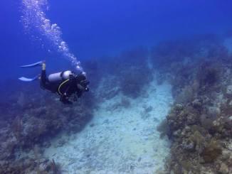 Plongee a Playa del Carmen