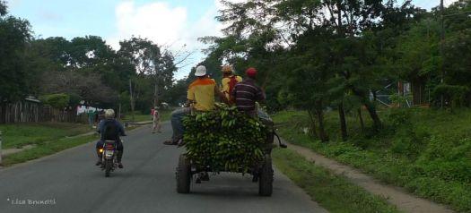 P1220486 nica green plantain wagon