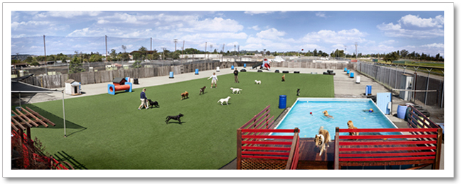 PlayDogPlay Doggy Daycare And Dog Boarding Facility In