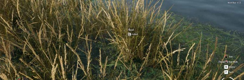 Medieval Dynasty: Reeds | Where To Find