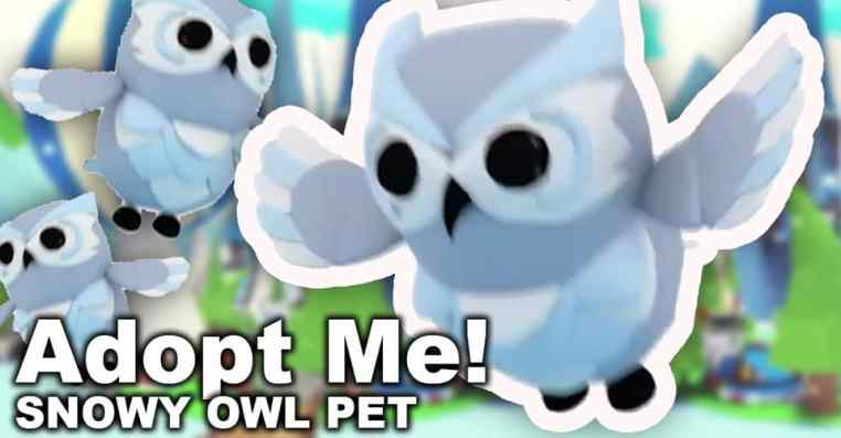Adopt Me: How Much Is A Snow Owl Worth
