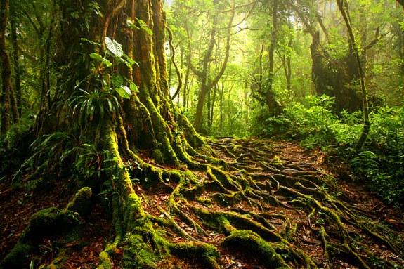 Monteverde_Cloud_Forrest_Costa_Rica
