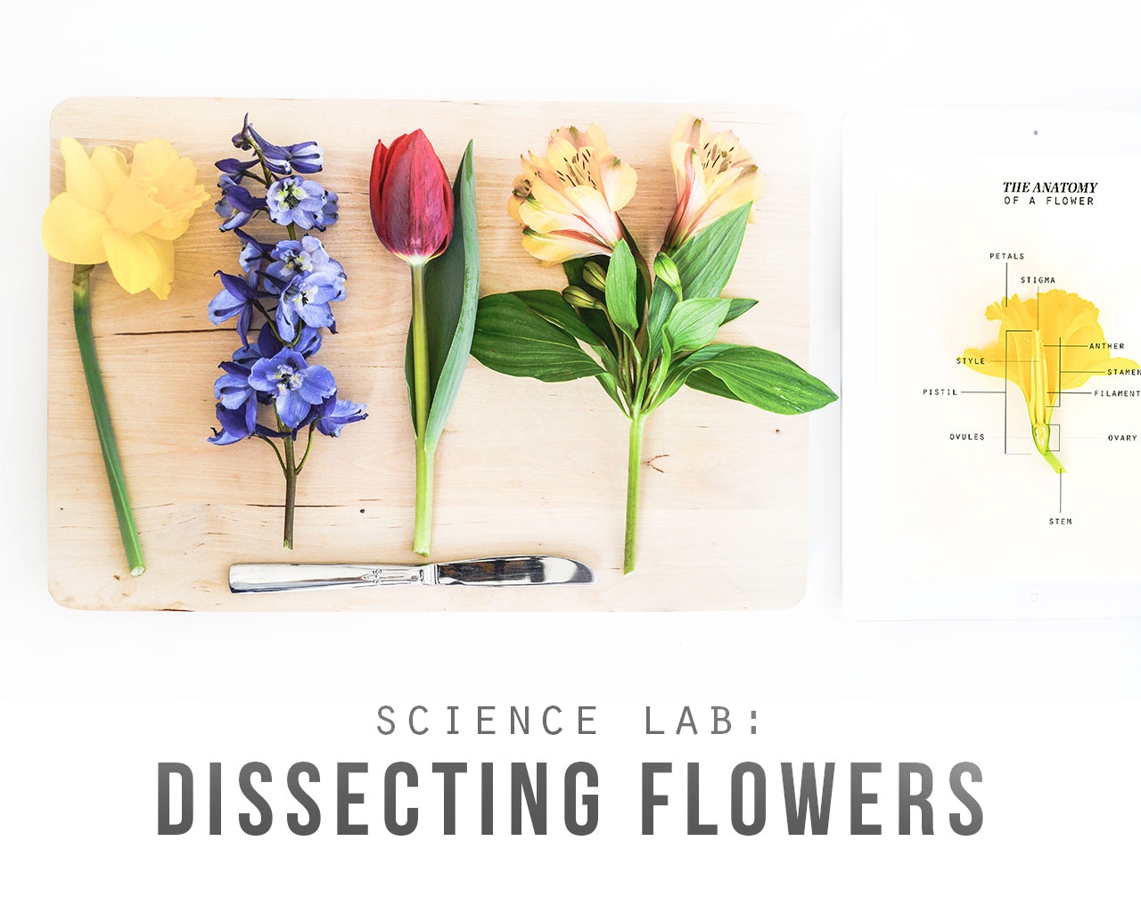 Science Lab Dissecting Flowers Playful Learning