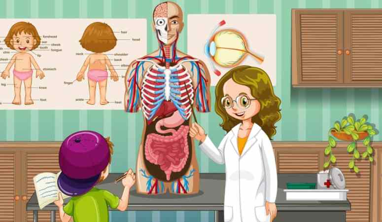 How to teach young kids about the human body in a fun and playful way